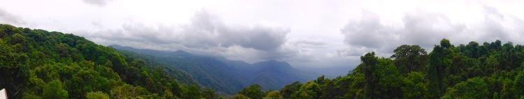 dorrigo view
