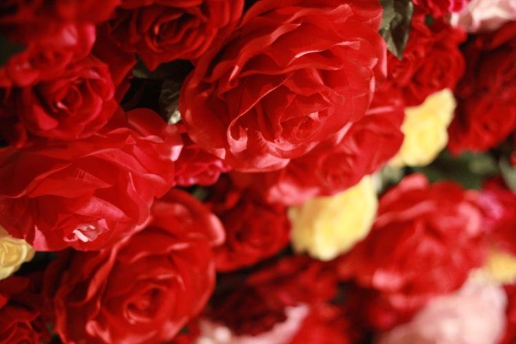 close up roses.jpg