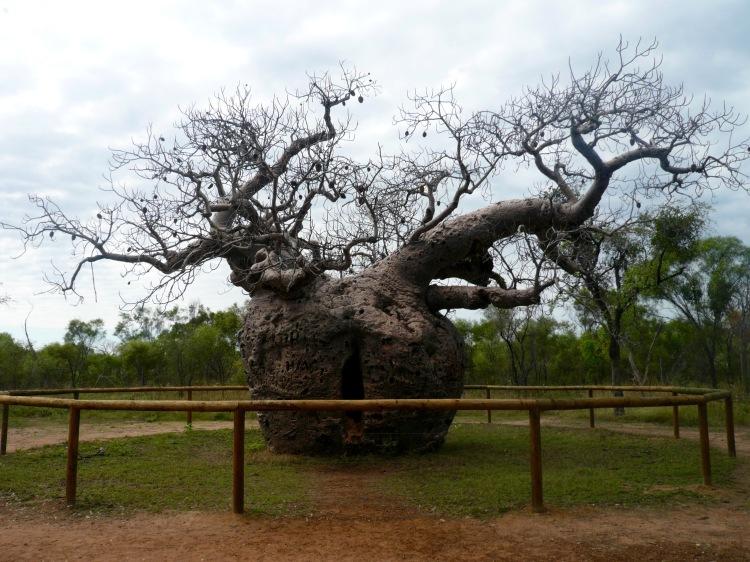 1. Boab Prison Tree