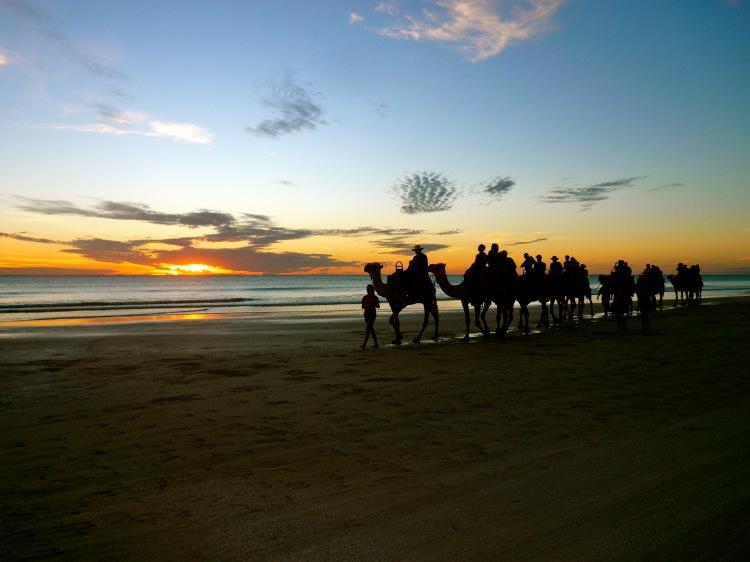 Camels sunset 2