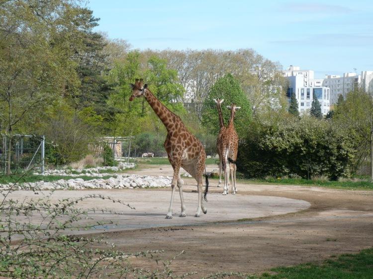 Giaraffe botanic gardens